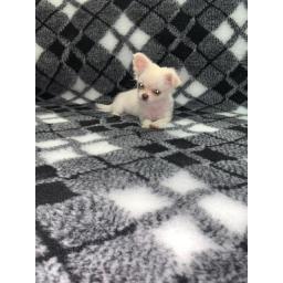 Professional Quality Vet Bedding, white/black tartan